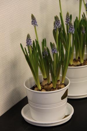 Blomkruka vit 0,8 L
