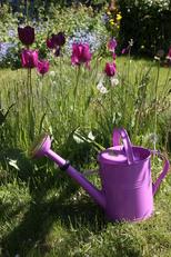 Vattenkanna 5 L Orchid